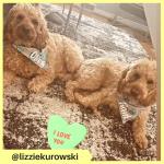lizziekurowski (2)
