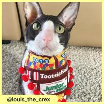 louis_the_crex