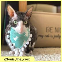 louis_the_crex (2)