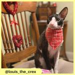 louis_the_crex (4)