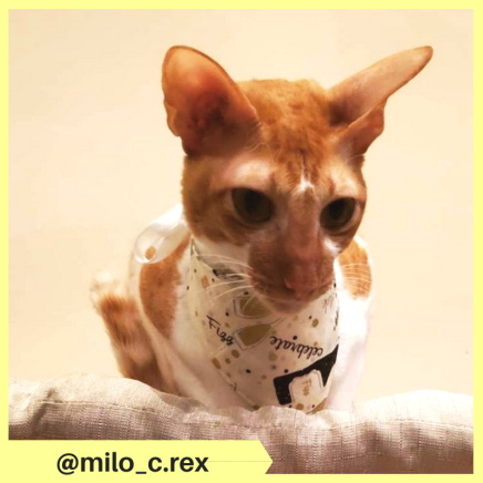 milo_c.rex