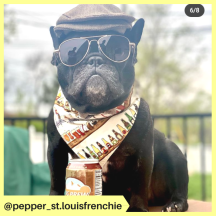 pepper_st.louisfrenchie (2)