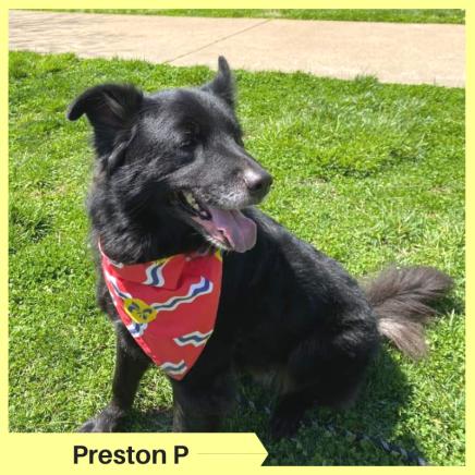 Preston P (2)