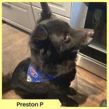 Preston P (3)