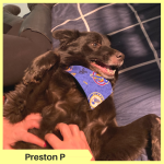 Preston P
