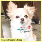 sophiethecoloradodog (2)