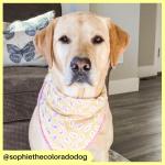 sophiethecoloradodog (3)