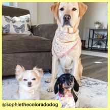 sophiethecoloradodog (5)
