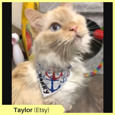 Taylor B Etsy (2)