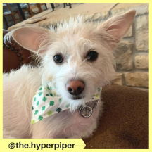 the.hyperpiper