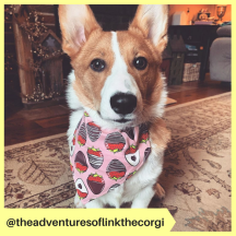 theadventuresoflinkthecorgi