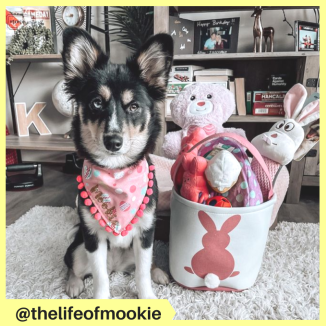 thelifeofmookie
