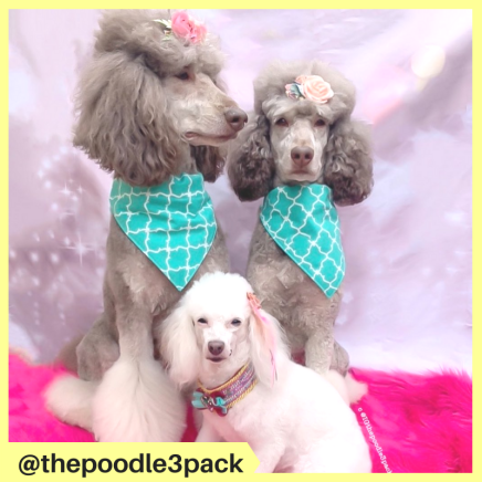 thepoodle3pack