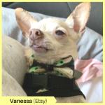 Vanessa R Etsy